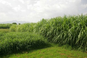 Help shape a feed and forage strategy for ILRI – Your inputs needed
