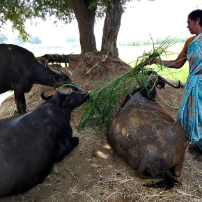 Animal nutrition approaches to profitable livestock farming and sustainable livelihoods